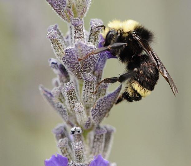 bee smaller