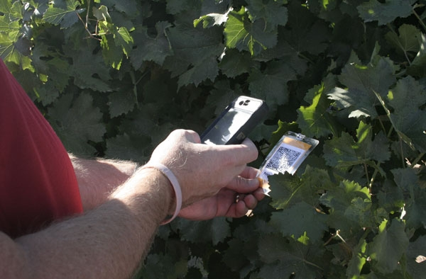 A field day participant scans the tag on Schioppettino grapevine.