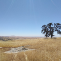 A site at the San Joaquin Experimental Range in Madera County, showing how annual grasses provide a continuous fuel supply for wildfire.