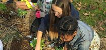 The Shaping Healthy Choices Program features the use of garden-enhanced learning. for UC ANR Knowledge Stream Blog