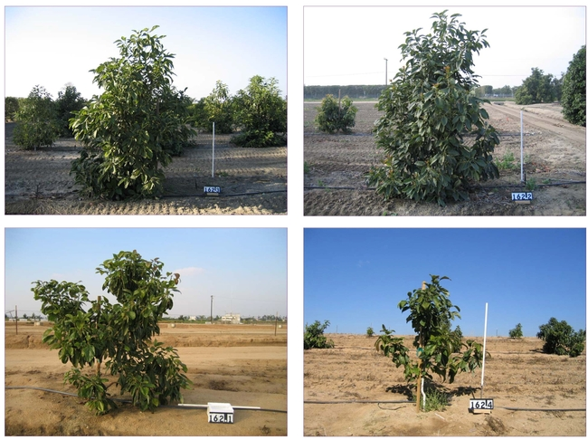 Figure 2: Tree height—a quantitative trait—at different locations in identical genotypes (clonally replicated). The white stick in each photo measures 1 m in length.