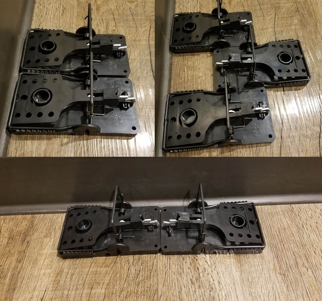 Effective placement of snap traps for rodents. Clockwise from topleft: side-byside, three in a row with alternating triggers, end-to-end. (Photo: B. Messenger-Sikes.)