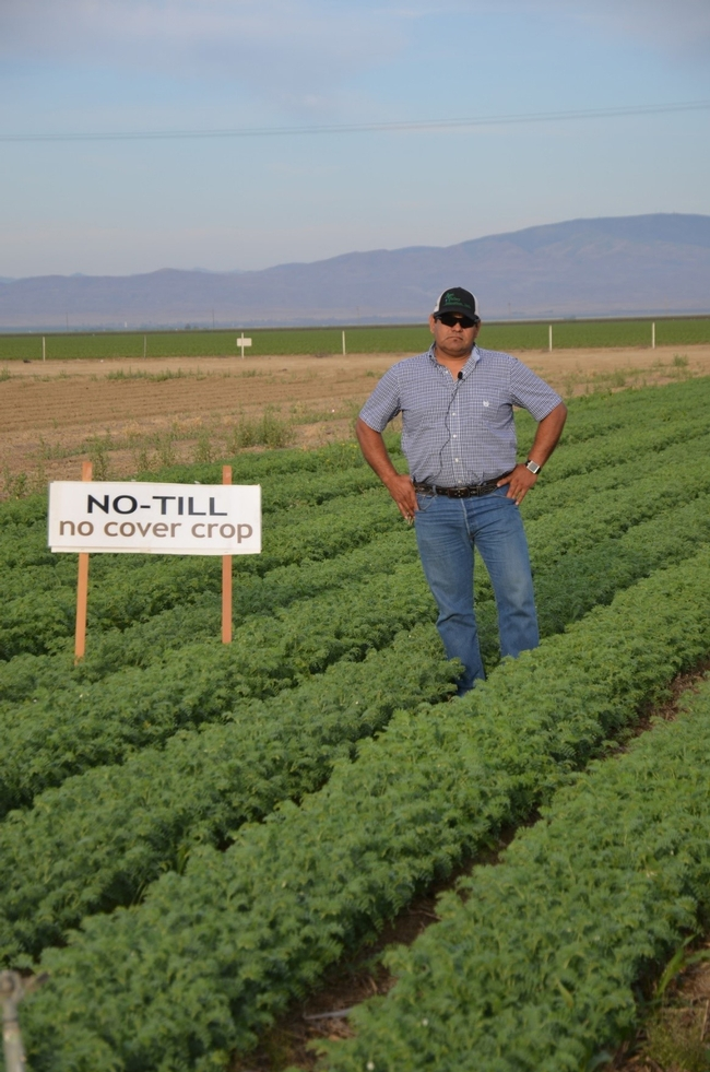 UC ANR Westside Research and Extension Center superintendent Rafael Solorio standing in no-tillage, no cover crop garbanzo plot