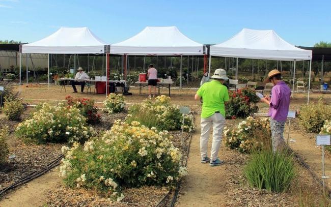 Volunteers evaluating plants in research plots 2019. (Photo: Karrie Reid)