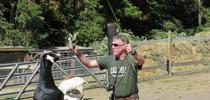 Goats showing food preferences. for Livestock & Range News Blog
