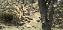 Cattle2 G.Ivens for Livestock & Range Blog