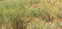 Weeds for Livestock & Range Blog