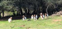 Photo by Pam Krone for Livestock & Range Blog