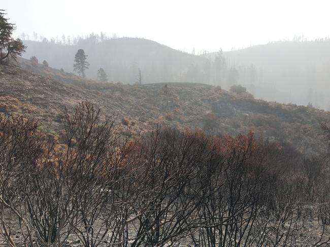 Haze and burned shrubs from the CZU fire. Photo taken on September 14, 2020.