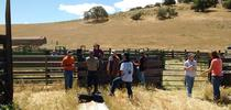 Some of the Schmidt family at pregnancy testing. for Livestock & Range Blog