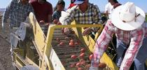 Farmworkers for Latino Briefs Digest Blog