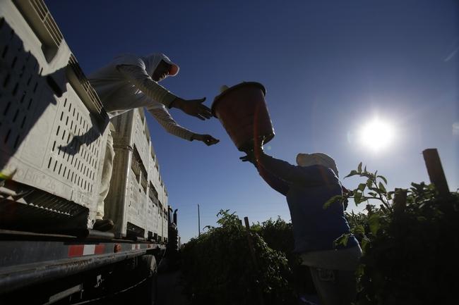 Farmworkers-