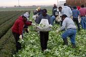 FarmWorkers Aids