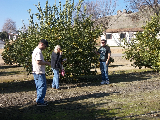 Rare Fruit Growers at Lindcove