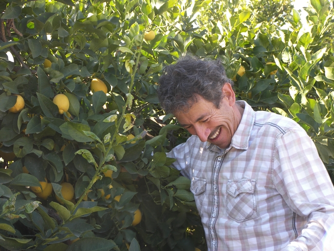 Big smiles in the lemon row