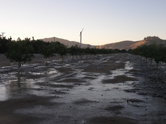 Wind machines raise air temperature at ground level.