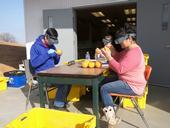 Monty, Jamie, and Sara looking for Fuller rose beetle eggs