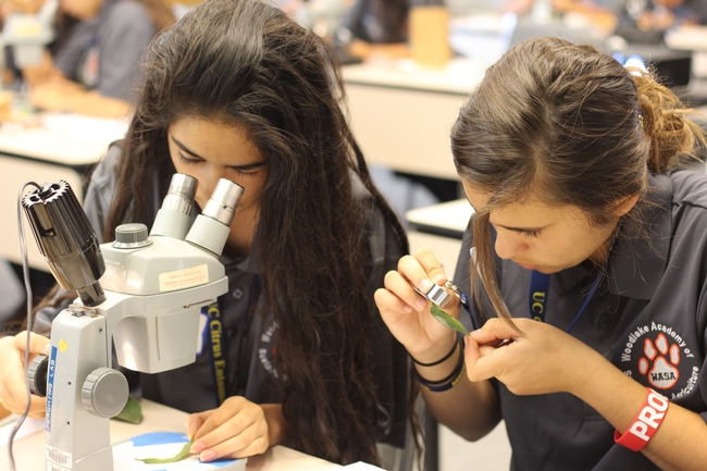 Natural Resources students study insects