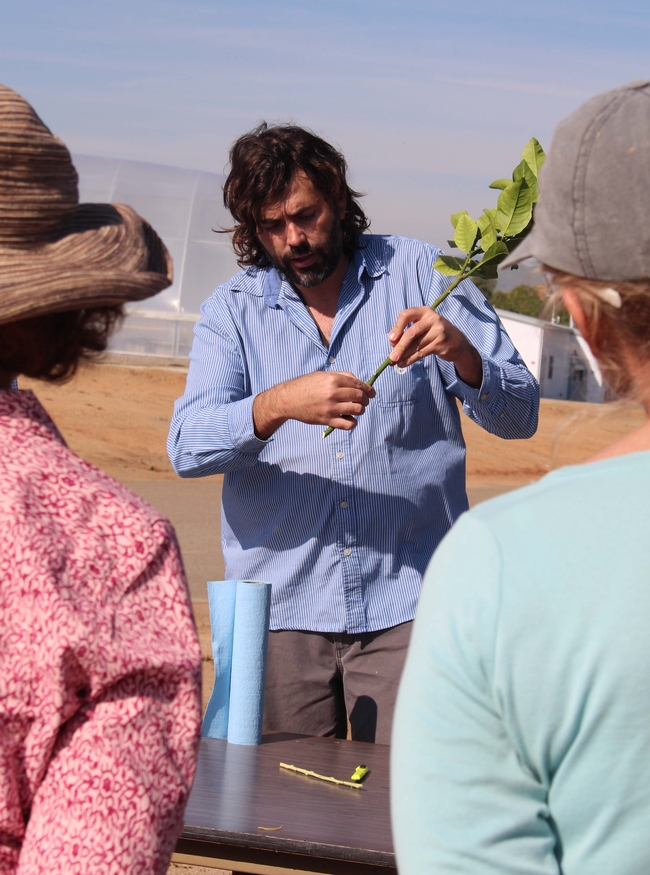 Rock Christiano demonstrated grafting techniques