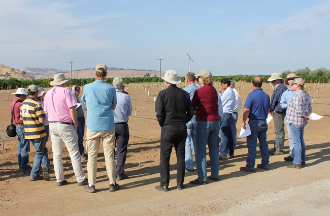 The Walnut and Almond Farm Advisor Training tour gathers around the new walnut rootstock observation trail at LREC