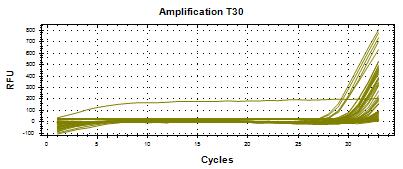 T30 strain results using a Taqman probe and Bio-Rad software.