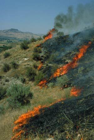 fire.Par.85308.Image.-1.-1.1[1]