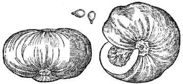 Lobels-Cheese-Pumpkin jpg