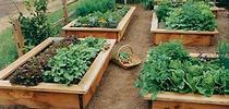 raised bed garden for UC Master Gardeners of Monterey Bay Blog
