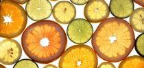 Citrus fruits for UC Master Gardeners of Monterey Bay Blog