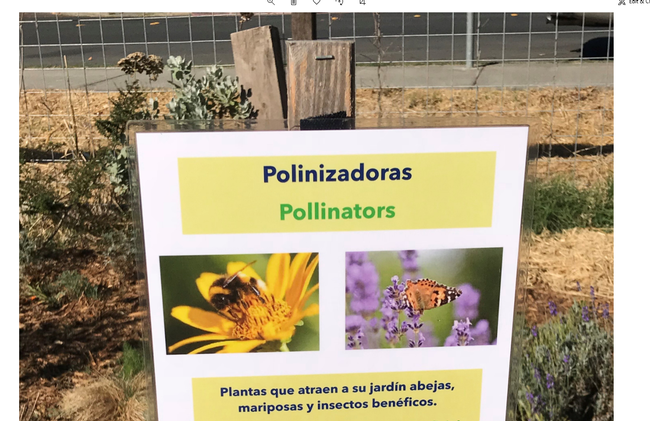 Flyer on a post that reads Pilinzadoras and Pollinars with bees and butterfly images.