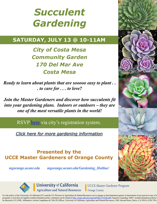 Join Us At Succulent Gardening, Costa Mesa