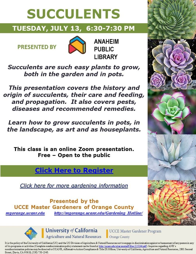 Join Us At Succulents Zoom Class