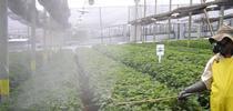 Guatemala%20spray%20pattern for Nursery & Floriculture News Blog