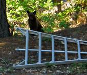 bear pruning1