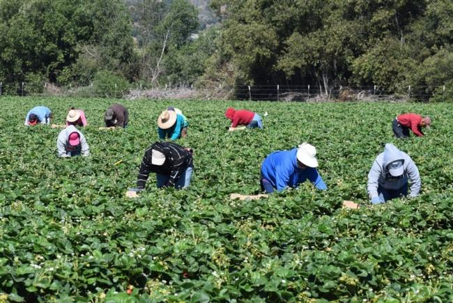 Farmworkers