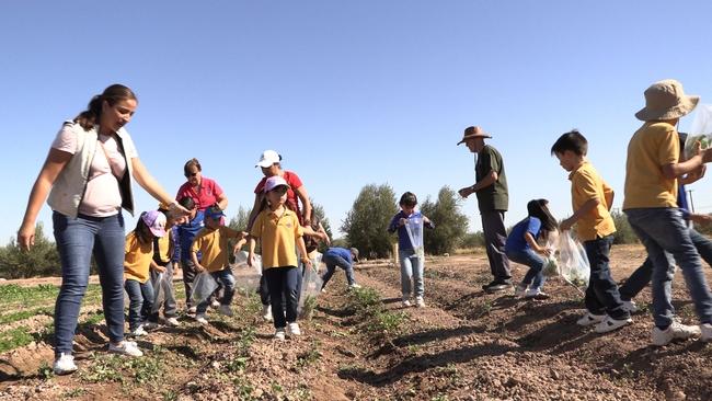 farm smart kid in fields