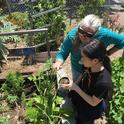 Master Gardeners Volunteers