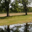 Oak Water
