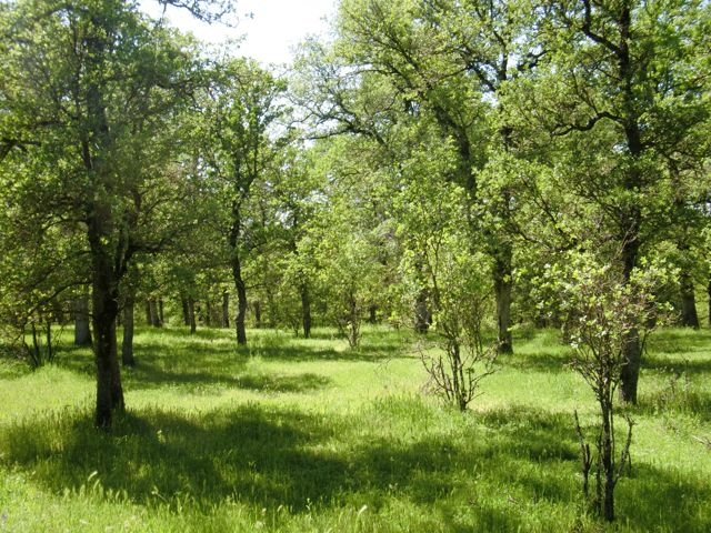 oak scenery 2