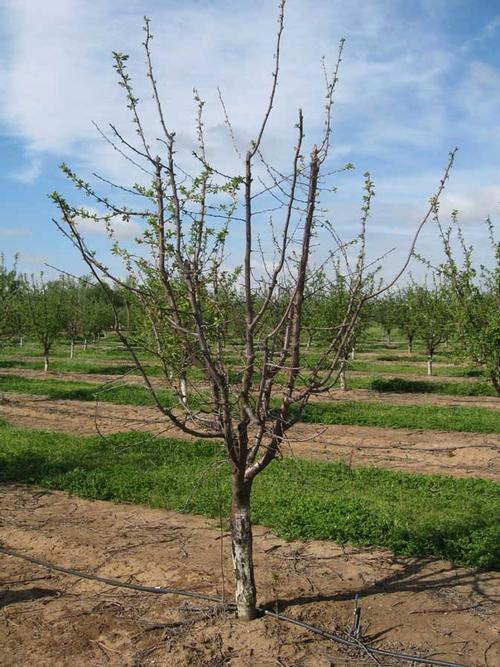 TreeWSymptoms.sm
