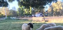 Elko4 for Ranching in the Sierra Foothills Blog