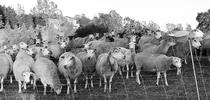241 for Ranching in the Sierra Foothills Blog