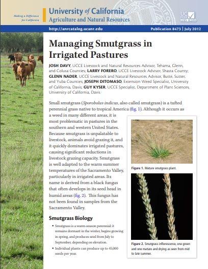 smutgrass pub
