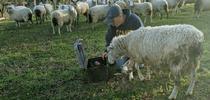 Photo credit: Kaleiah Schiller for Ranching in the Sierra Foothills Blog
