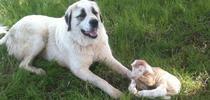 531964 412875048740828 557813658 n for Ranching in the Sierra Foothills Blog