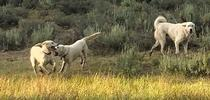 E90C09C8-EE3D-4157-A324-4568F344E73D for Ranching in the Sierra Foothills Blog