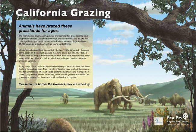 Trail Sign Panel: California Grazing