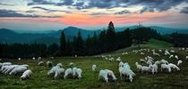 Sheep Gr for Outstanding in the Field: Views from North Coast Rangeland Blog
