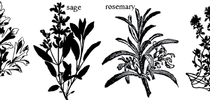 Parsely sage rosemary and thyme for Master Food Preservers San Bernardino County Blog