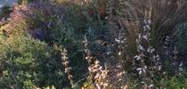 Soil Prep - Bains for San Bernardino County Master Gardeners Blog